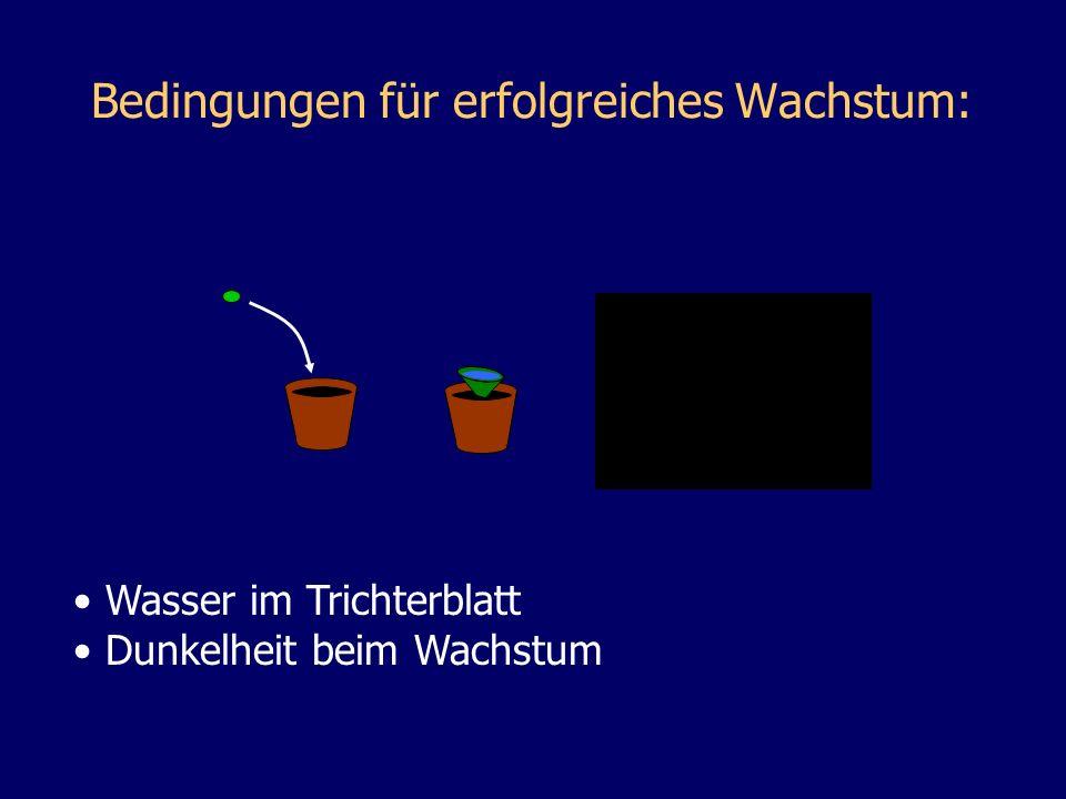 Bedingungen für erfolgreiches Wachstum: Wasser im Trichterblatt Dunkelheit beim Wachstum