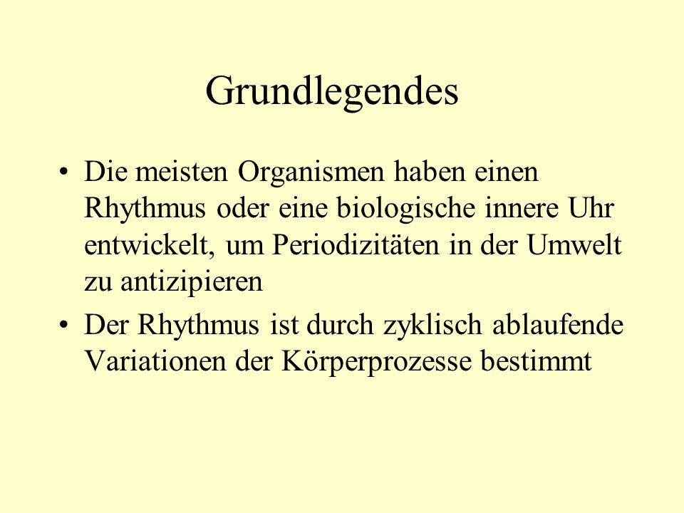 Kriterien des biologischen Rhythmus 1.Periode (normalerweise 24 stunden) 2.