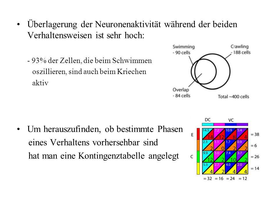 Überlagerung der Neuronenaktivität während der beiden Verhaltensweisen ist sehr hoch: - 93% der Zellen, die beim Schwimmen oszillieren, sind auch beim