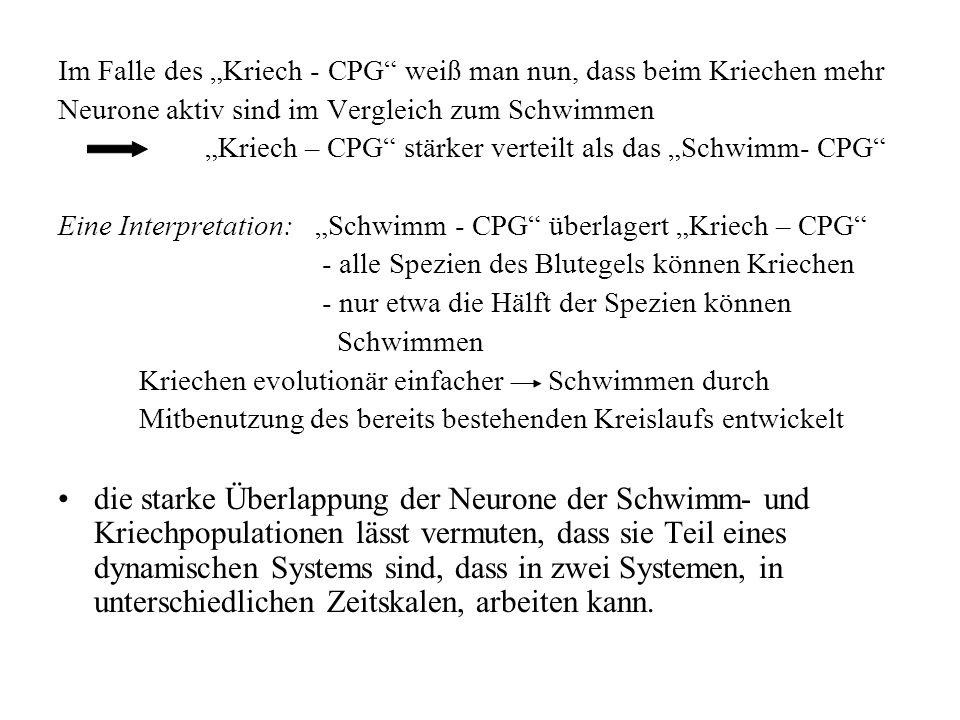 Im Falle des Kriech - CPG weiß man nun, dass beim Kriechen mehr Neurone aktiv sind im Vergleich zum Schwimmen Kriech – CPG stärker verteilt als das Sc