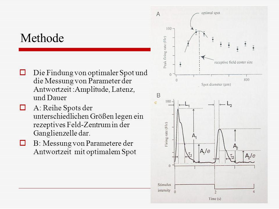 Methode Die Findung von optimaler Spot und die Messung von Parameter der Antwortzeit :Amplitude, Latenz, und Dauer A: Reihe Spots der unterschiedliche