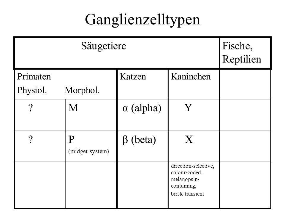 Ganglienzelltypen SäugetiereFische, Reptilien Primaten Physiol. Morphol. KatzenKaninchen ?M α (alpha) Y ?P (midget system) β (beta) X direction-select