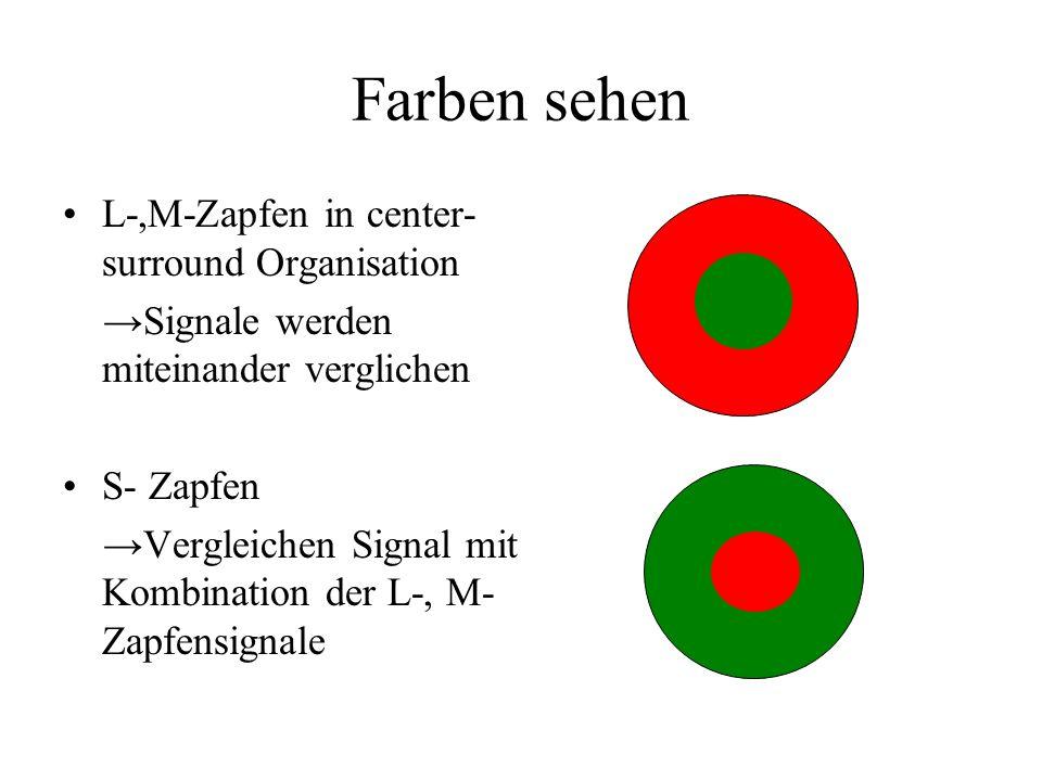 Farben sehen L-,M-Zapfen in center- surround Organisation Signale werden miteinander verglichen S- Zapfen Vergleichen Signal mit Kombination der L-, M