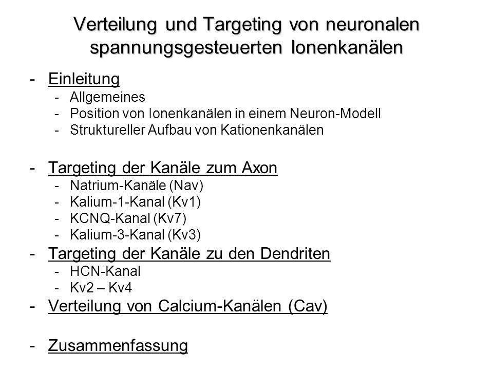 Verteilung und Targeting von neuronalen spannungsgesteuerten Ionenkanälen -Einleitung -Allgemeines -Position von Ionenkanälen in einem Neuron-Modell -