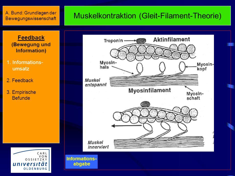 Nerv-Muskel-Übertragung Informations - abgabe Muskel- kontraktion Feedback (Bewegung und Information) 1. Informations- umsatz 2. Feedback 3. Empirisch