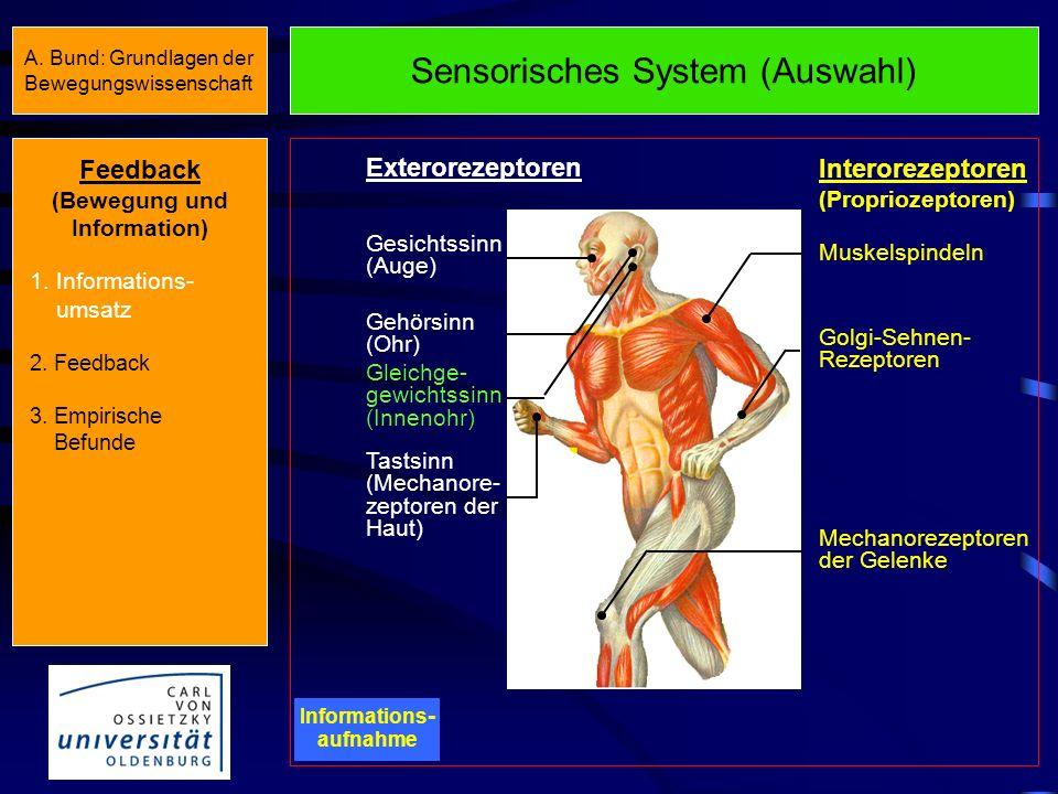 Sensomotorischer Informationsumsatz III Informations - aufnahme Informations - verarbeitung Informations - abgabe Informations - rückmeldung Wahrnehmu