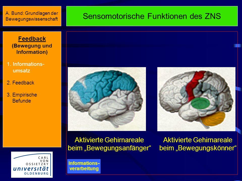 Sensomotorische Funktionen des ZNS Informations - verarbeitung StrukturFunktion Sensorische und motorische Areale des Cortex Vorbereitung, Grobplanung