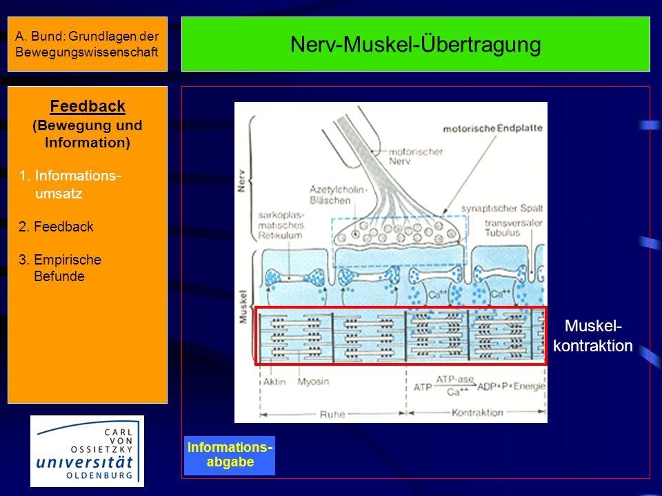 Sensomotorische Funktionen des ZNS Informations - verarbeitung Aktivierte Gehirnareale beim Bewegungsanfänger Aktivierte Gehirnareale beim Bewegungskö