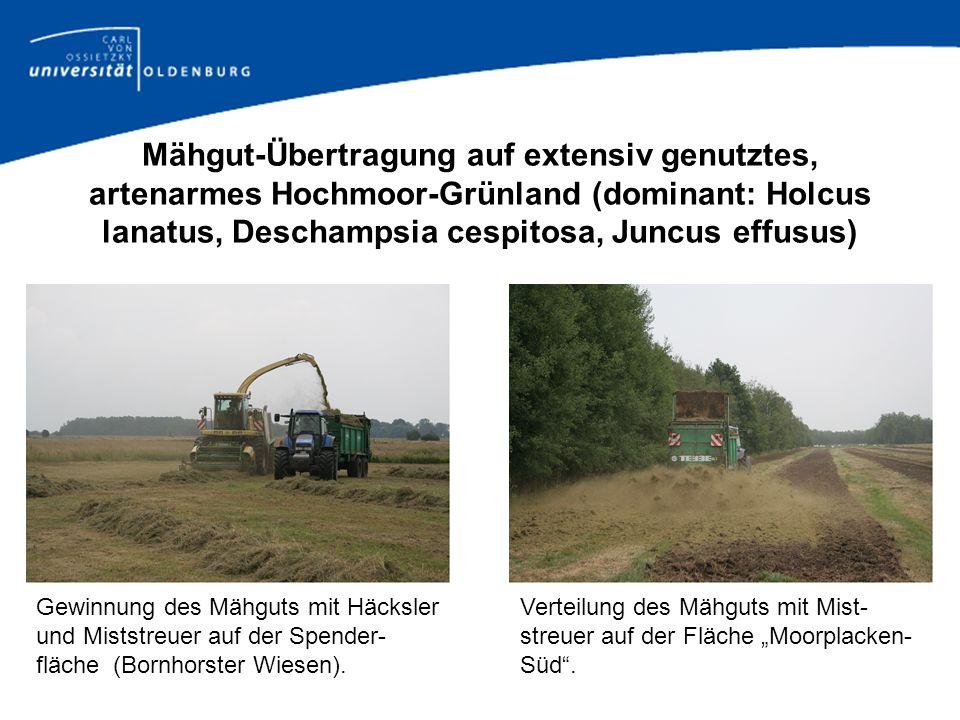 Mähgut-Übertragung auf extensiv genutztes, artenarmes Hochmoor-Grünland (dominant: Holcus lanatus, Deschampsia cespitosa, Juncus effusus) Gewinnung de
