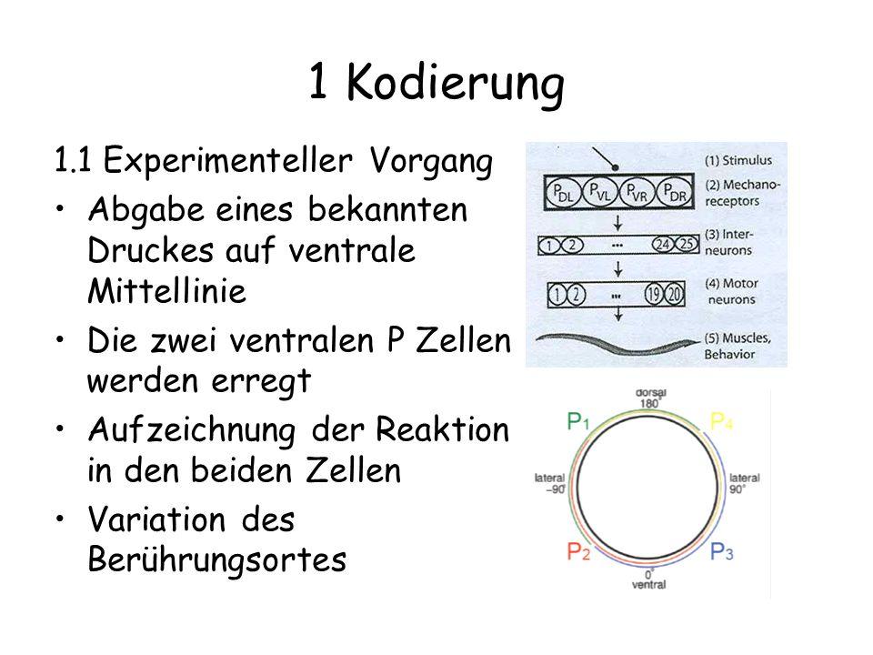 1 Kodierung 1.1 Experimenteller Vorgang Abgabe eines bekannten Druckes auf ventrale Mittellinie Die zwei ventralen P Zellen werden erregt Aufzeichnung der Reaktion in den beiden Zellen Variation des Berührungsortes