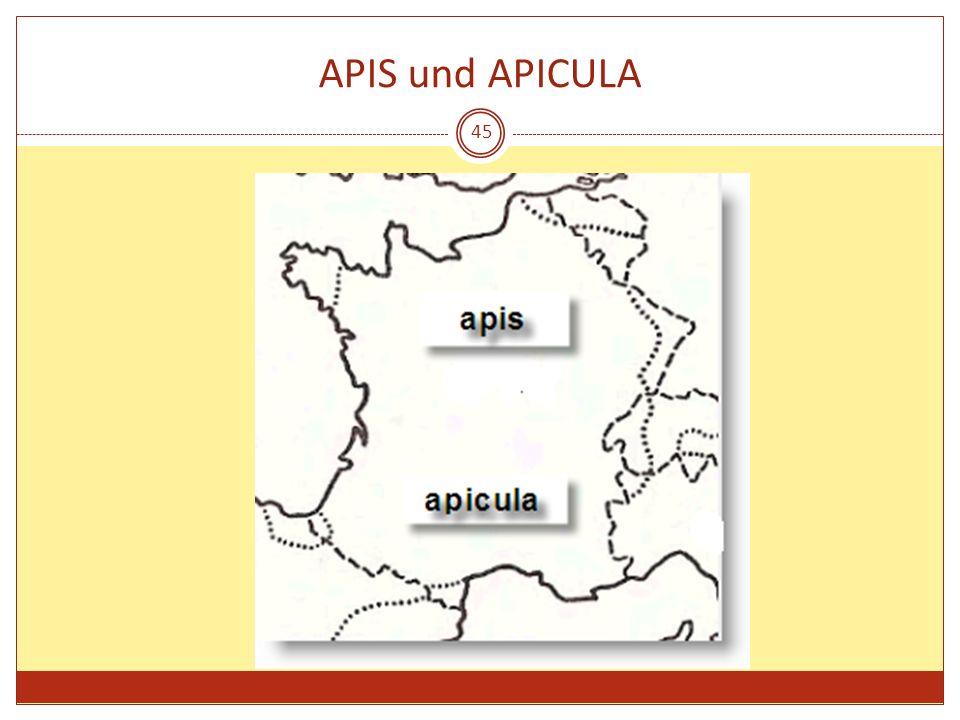 APIS und APICULA 45