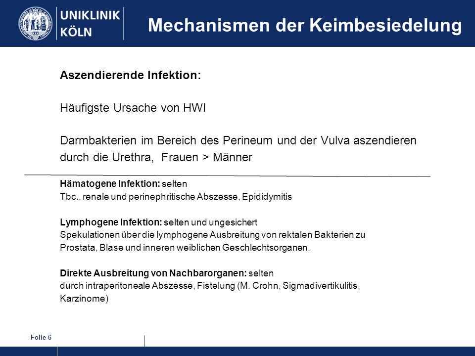 Folie 6 Mechanismen der Keimbesiedelung Aszendierende Infektion: Häufigste Ursache von HWI Darmbakterien im Bereich des Perineum und der Vulva aszendi