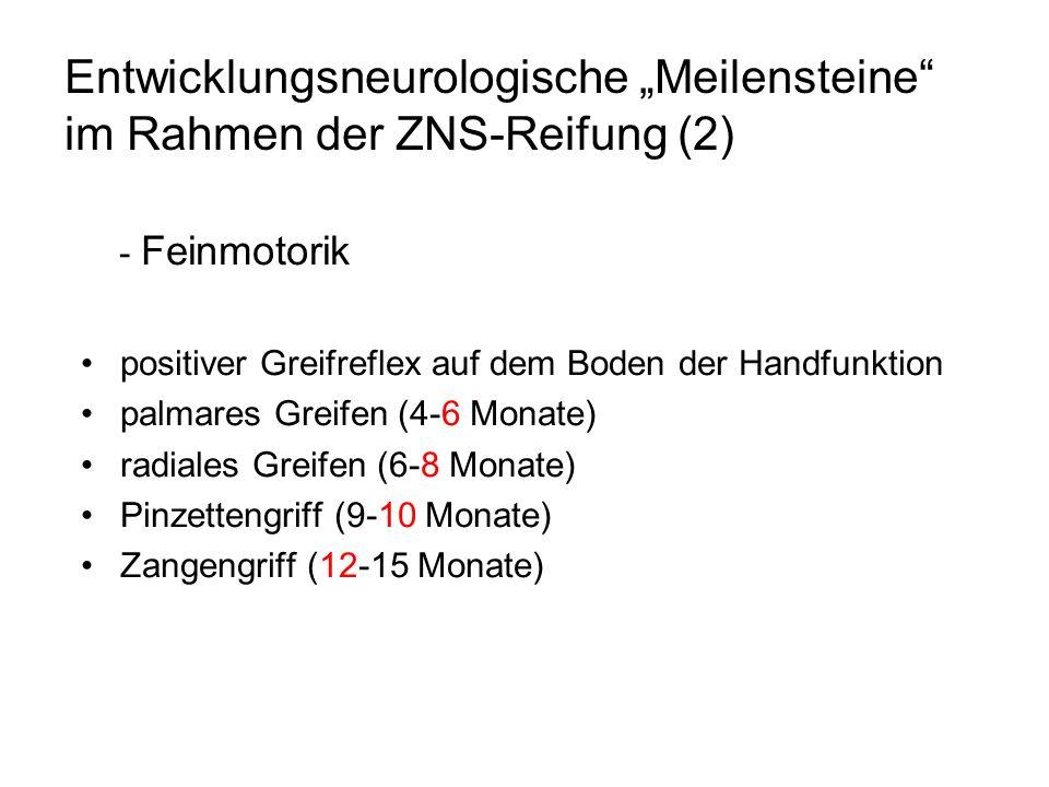 Entwicklungsneurologische Meilensteine im Rahmen der ZNS-Reifung (2) - Feinmotorik positiver Greifreflex auf dem Boden der Handfunktion palmares Greif
