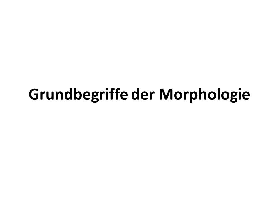 Grundbegriffe der Morphologie
