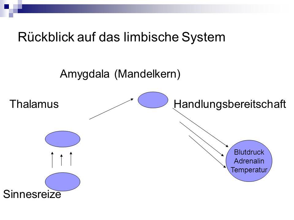 Rückblick auf das limbische System Amygdala (Mandelkern) Thalamus Handlungsbereitschaft Sinnesreize Blutdruck Adrenalin Temperatur