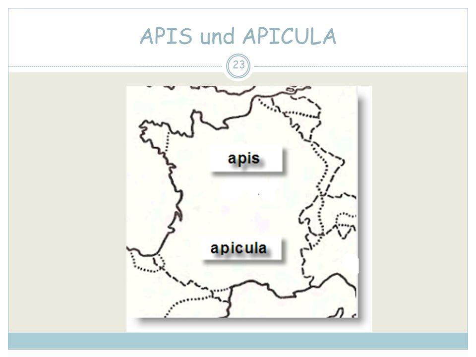 APIS und APICULA 23
