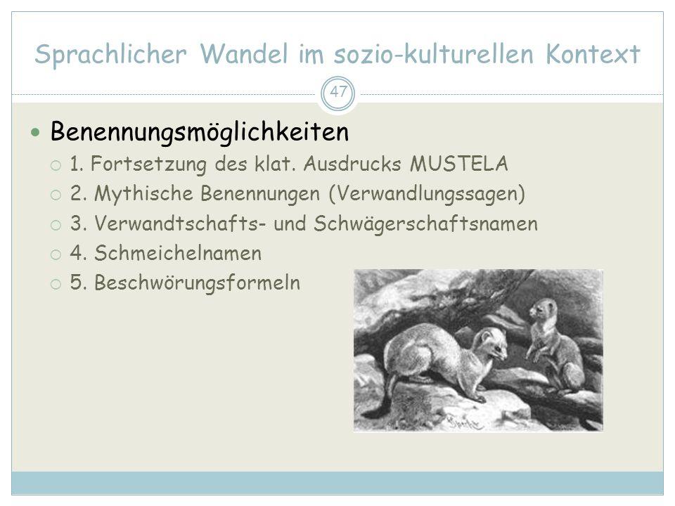 47 Sprachlicher Wandel im sozio-kulturellen Kontext Benennungsmöglichkeiten 1. Fortsetzung des klat. Ausdrucks MUSTELA 2. Mythische Benennungen (Verwa