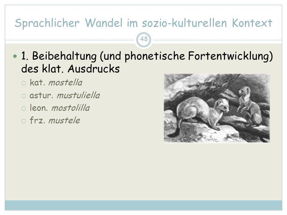 48 Sprachlicher Wandel im sozio-kulturellen Kontext 1. Beibehaltung (und phonetische Fortentwicklung) des klat. Ausdrucks kat. mostella astur. mustuli
