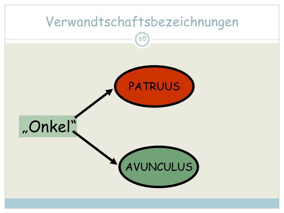 65 Verwandtschaftsbezeichnungen Onkel PATRUUS AVUNCULUS