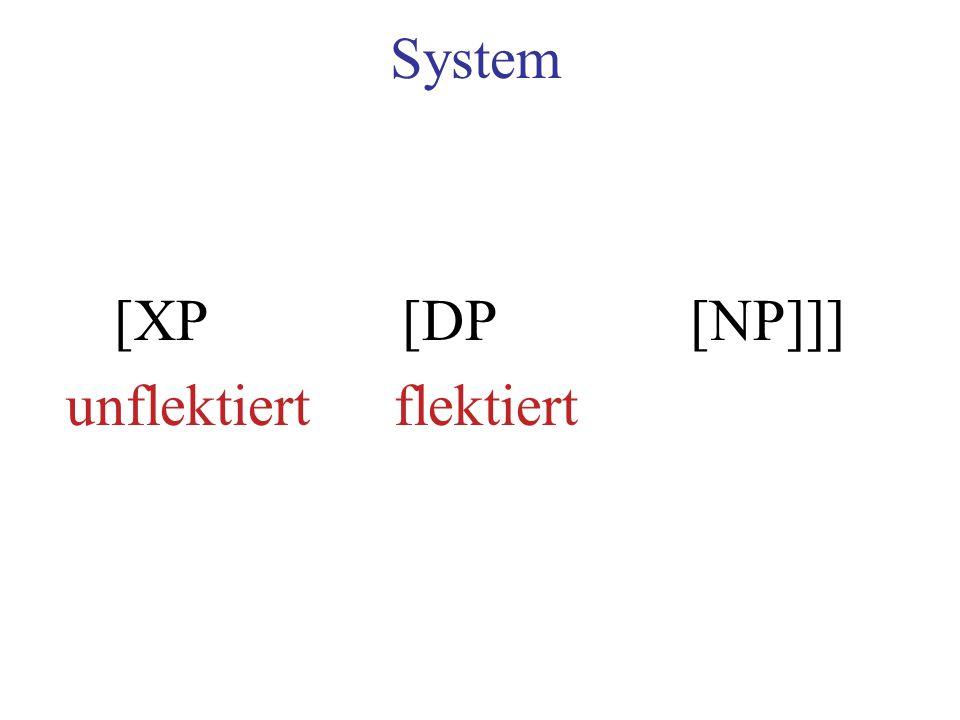 System [XP[DP[NP]]] unflektiertflektiert