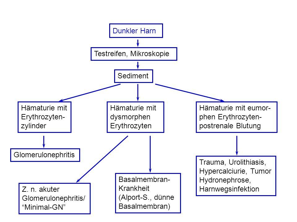 Dunkler Harn Testreifen, Mikroskopie Sediment Hämaturie mit Erythrozyten- zylinder Hämaturie mit eumor- phen Erythrozyten- postrenale Blutung Hämaturi