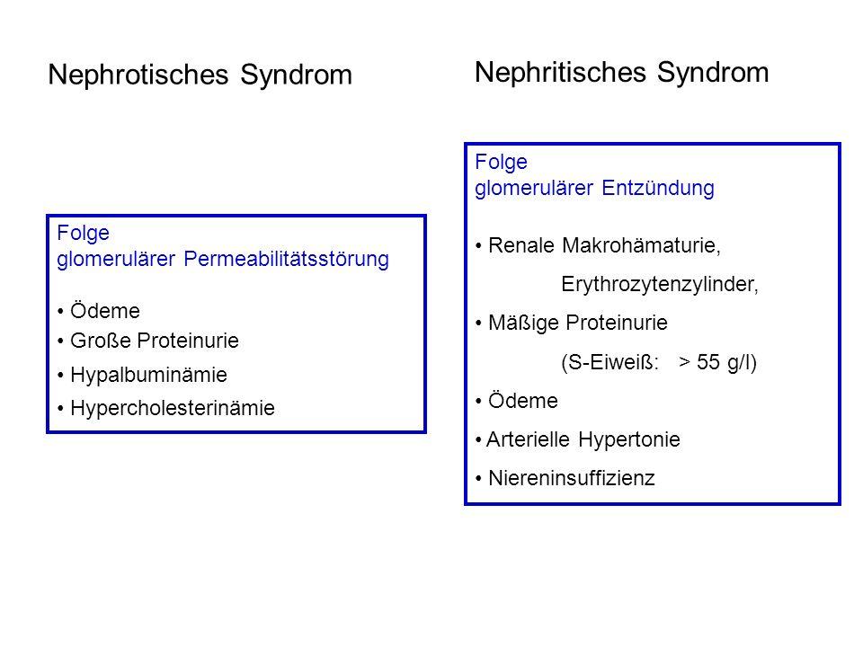 Nephrotisches Syndrom Folge glomerulärer Permeabilitätsstörung Ödeme Große Proteinurie Hypalbuminämie Hypercholesterinämie Nephritisches Syndrom Folge