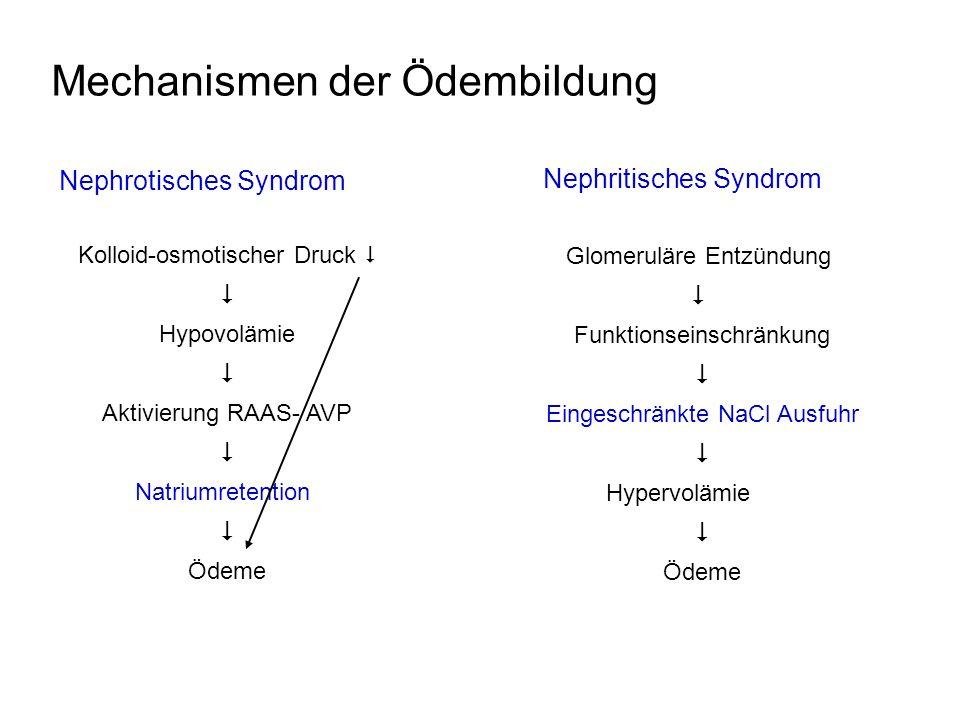 Mechanismen der Ödembildung Nephrotisches Syndrom Nephritisches Syndrom Kolloid-osmotischer Druck Hypovolämie Aktivierung RAAS- AVP Natriumretention Ö