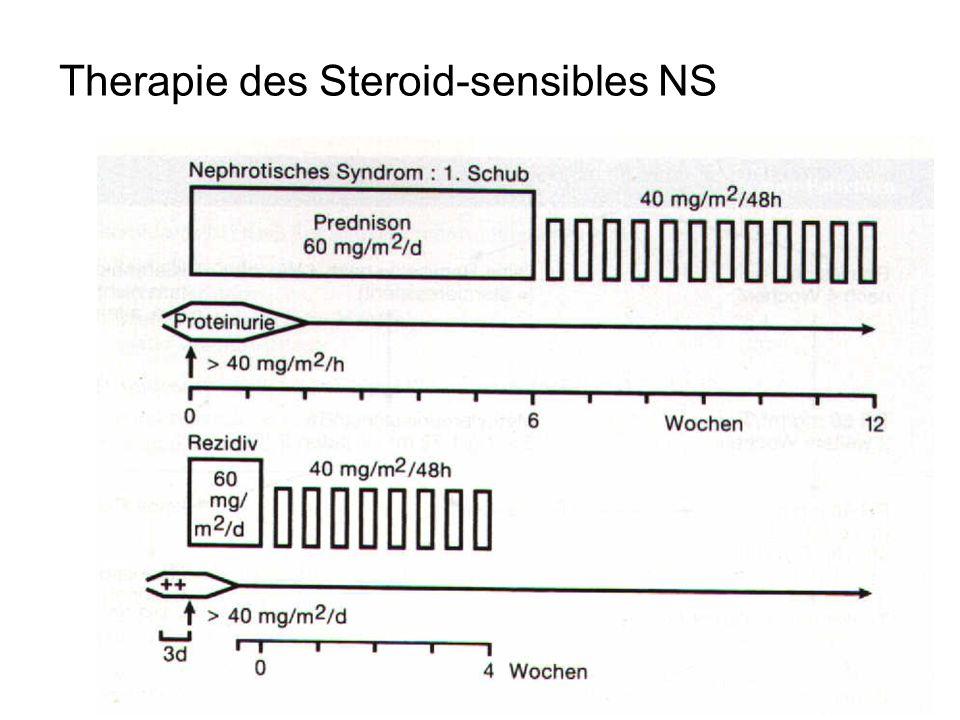 Therapie des Steroid-sensibles NS