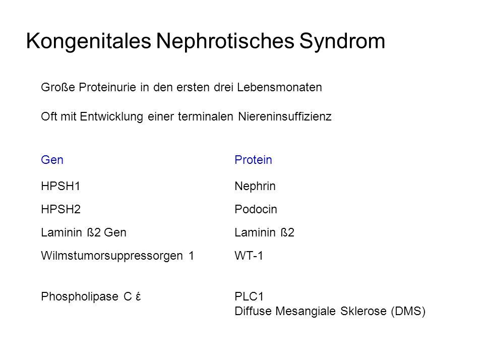 Kongenitales Nephrotisches Syndrom Große Proteinurie in den ersten drei Lebensmonaten Oft mit Entwicklung einer terminalen Niereninsuffizienz GenProte