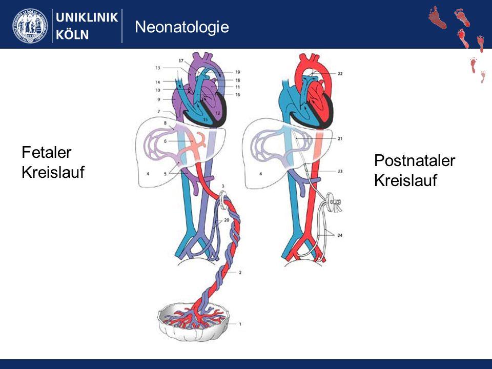 Neonatologie Fetaler Kreislauf Postnataler Kreislauf