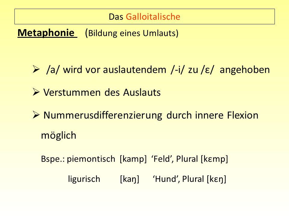 Das Galloitalische Metaphonie ( Bildung eines Umlauts) /a/ wird vor auslautendem /-i/ zu /ε/ angehoben Verstummen des Auslauts Nummerusdifferenzierung