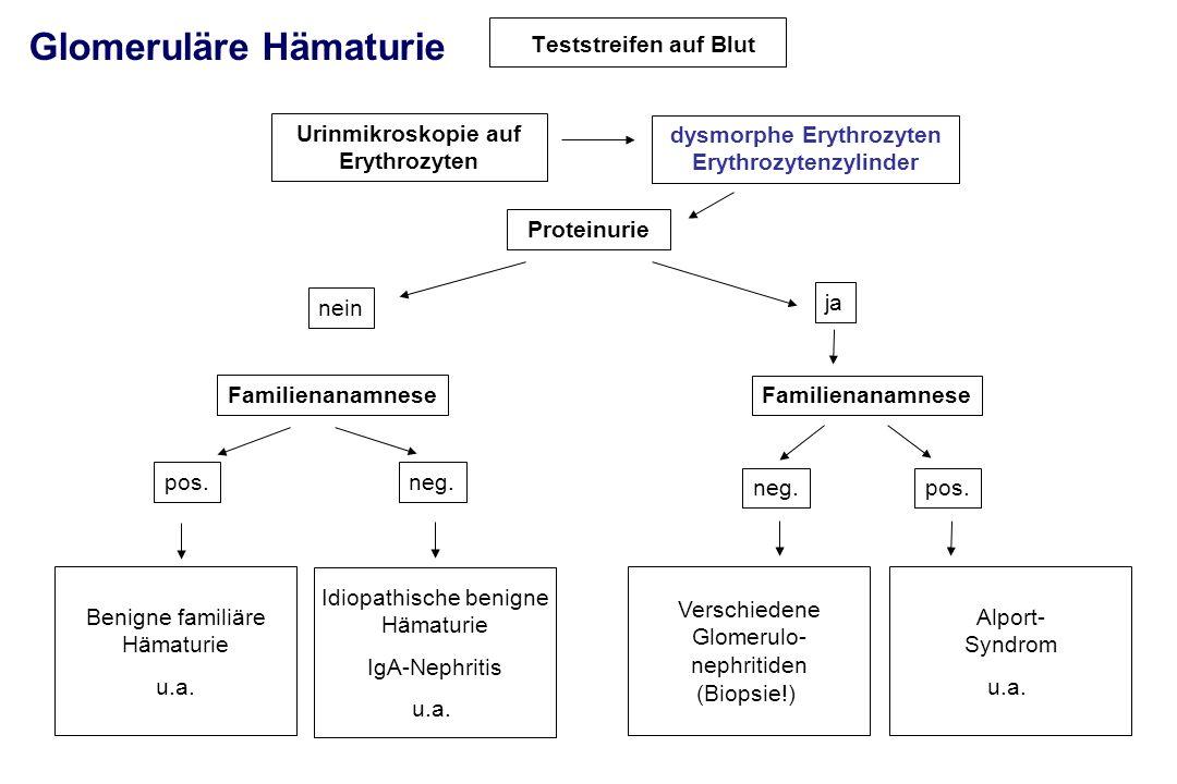 Teststreifen auf Blut Urinmikroskopie auf Erythrozyten Proteinurie nein ja Familienanamnese pos.neg. pos. Benigne familiäre Hämaturie u.a. Glomeruläre