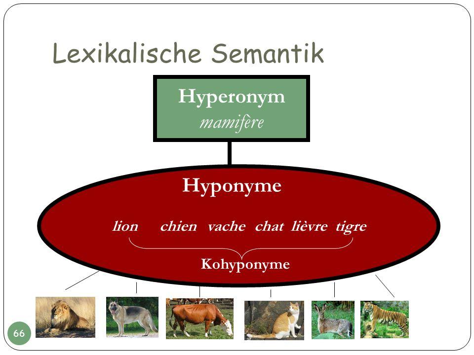 Lexikalische Semantik Hyperonym mamifère lionchien vache chat lièvre tigre Kohyponyme Hyponyme 66