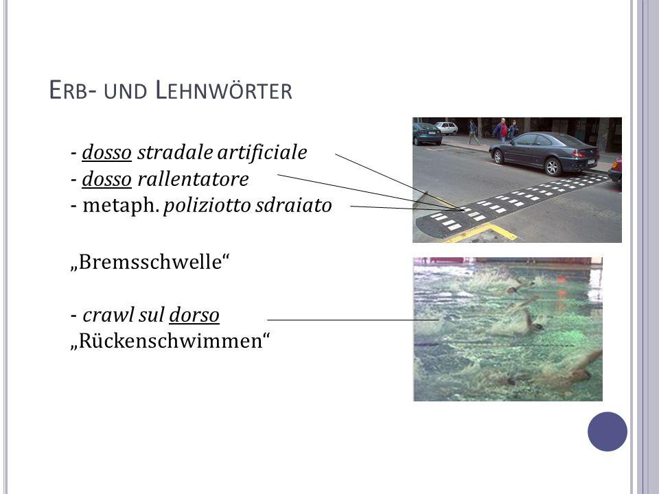 E RB - UND L EHNWÖRTER - dosso stradale artificiale - dosso rallentatore - metaph. poliziotto sdraiato Bremsschwelle - crawl sul dorso Rückenschwimmen