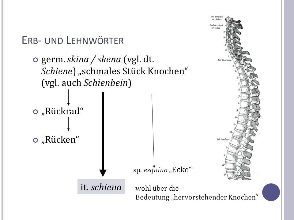 E RB - UND L EHNWÖRTER germ. skina / skena (vgl. dt. Schiene) schmales Stück Knochen (vgl. auch Schienbein) Rückrad Rücken it. schiena sp. esquina Eck