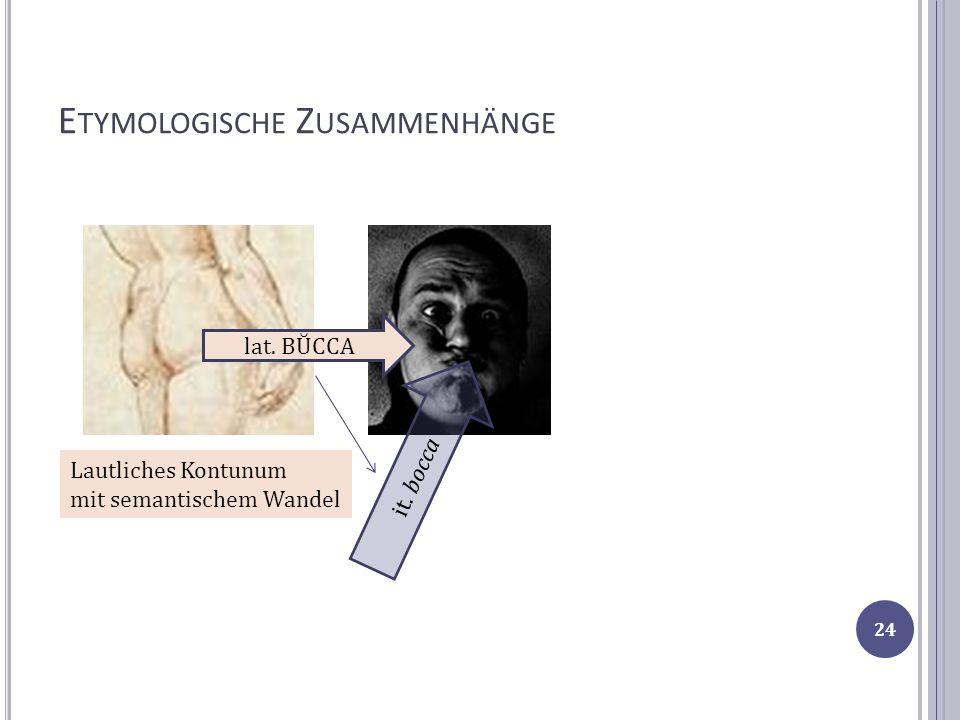 E TYMOLOGISCHE Z USAMMENHÄNGE lat. BŬCCA it. bocca Lautliches Kontunum mit semantischem Wandel 24