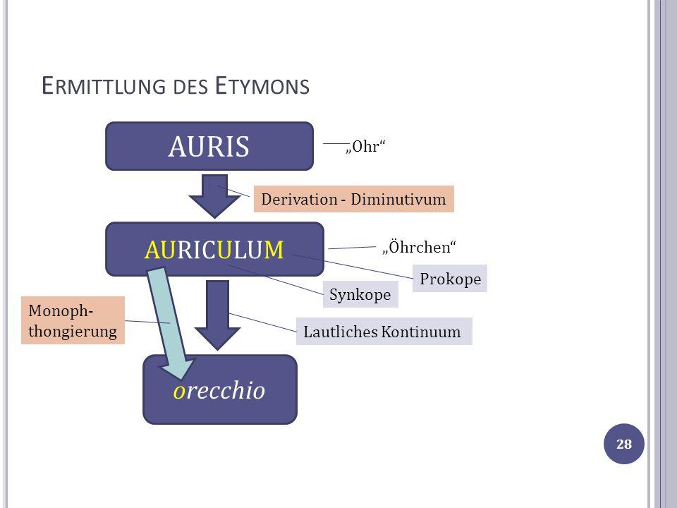 E RMITTLUNG DES E TYMONS AURICULUM AURIS Derivation - Diminutivum Ohr Öhrchen orecchio Lautliches Kontinuum Monoph- thongierung Synkope Prokope 28