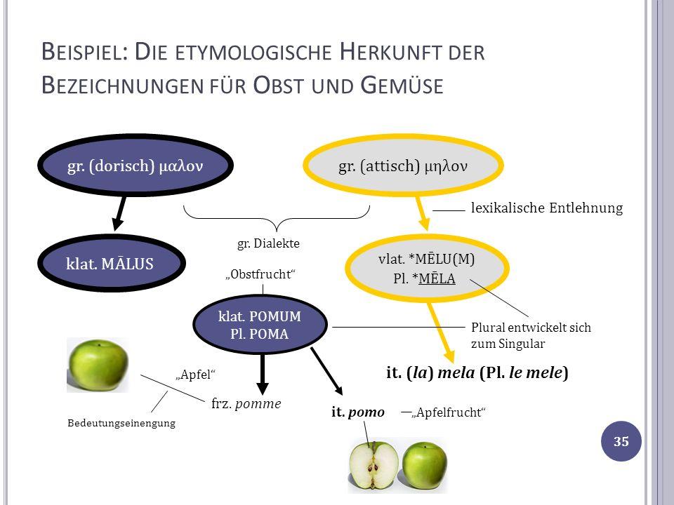 B EISPIEL : D IE ETYMOLOGISCHE H ERKUNFT DER B EZEICHNUNGEN FÜR O BST UND G EMÜSE klat. MĀLUS gr. (dorisch) μαλονgr. (attisch) μηλον vlat. *MĒLU(M) Pl
