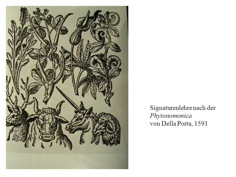 Signaturenlehre nach der Phytonomonica von Della Porta, 1591