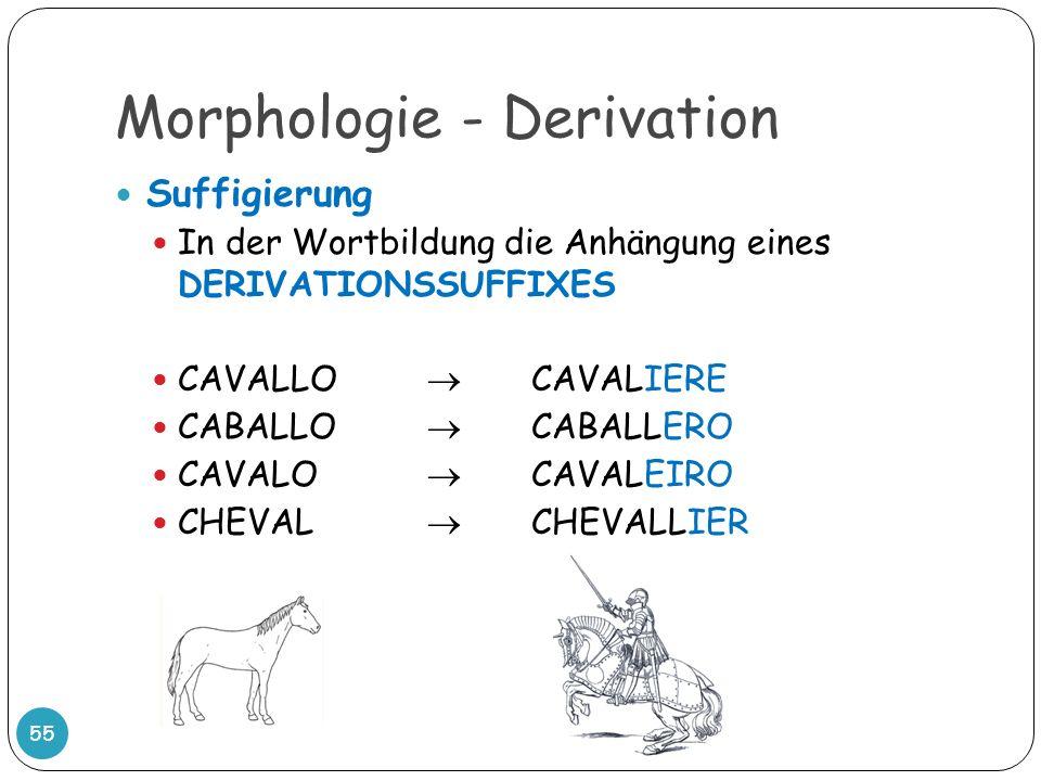 Morphologie - Derivation 55 Suffigierung In der Wortbildung die Anhängung eines DERIVATIONSSUFFIXES CAVALLO CAVALIERE CABALLO CABALLERO CAVALO CAVALEI