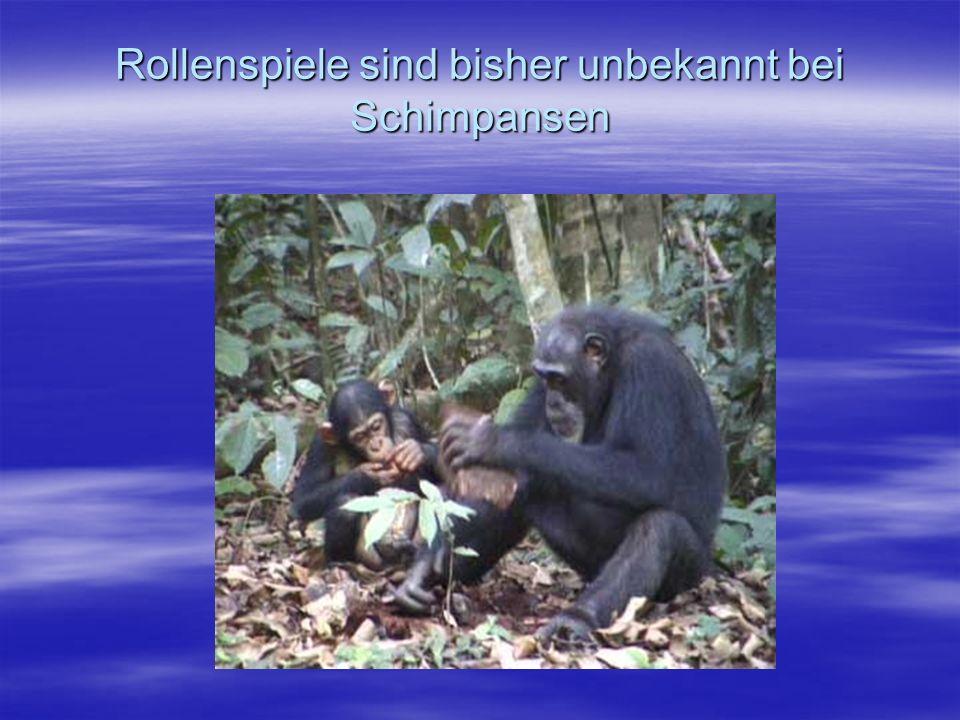 Rollenspiele sind bisher unbekannt bei Schimpansen