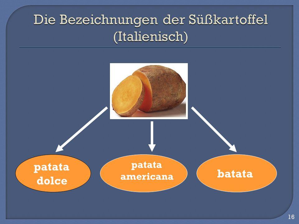 16 patata dolce batata patata americana
