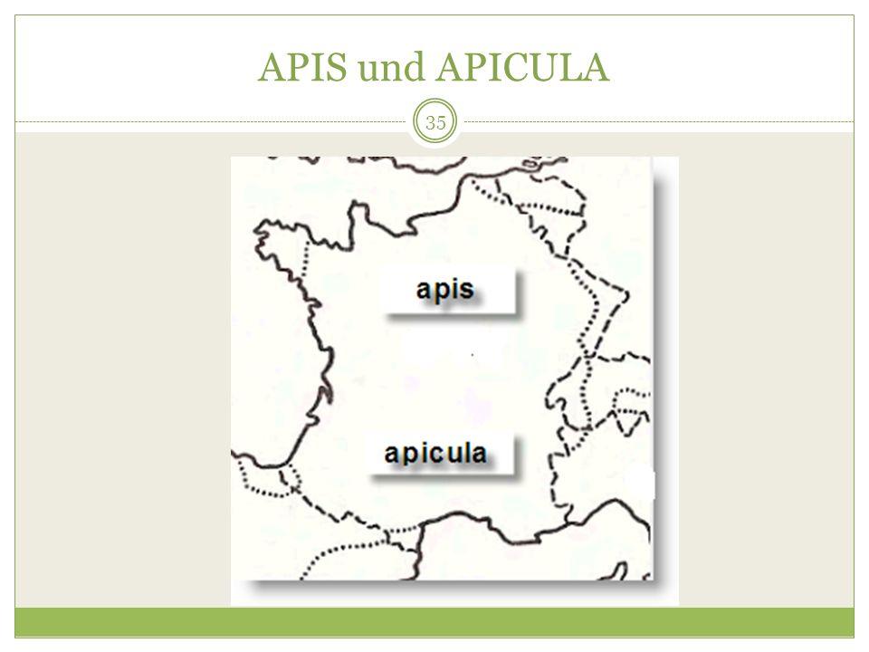 APIS und APICULA 35