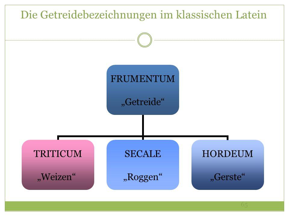 65 Die Getreidebezeichnungen im klassischen Latein FRUMENTUM Getreide TRITICUM Weizen SECALE Roggen HORDEUM Gerste