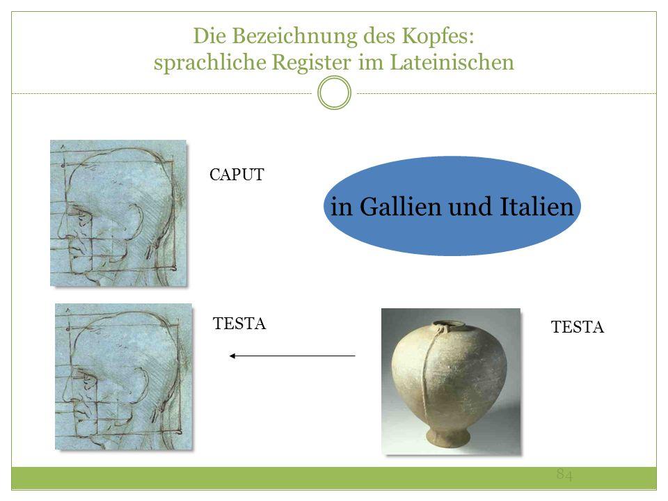 84 Die Bezeichnung des Kopfes: sprachliche Register im Lateinischen CAPUT TESTA in Gallien und Italien