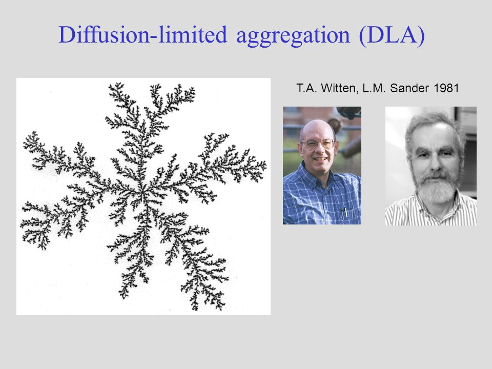 Diffusion-limited aggregation (DLA) T.A. Witten, L.M. Sander 1981