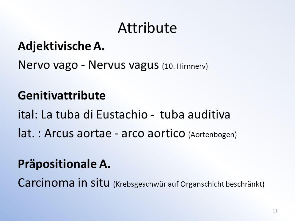 Adjektivische A.Nervo vago - Nervus vagus (10.