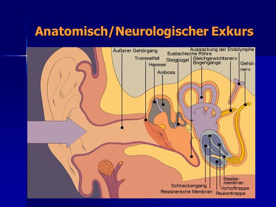 Anatomisch/Neurologischer Exkurs