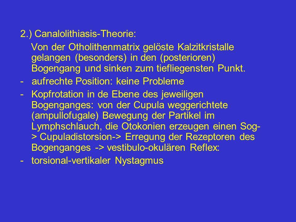2.) Canalolithiasis-Theorie: Von der Otholithenmatrix gelöste Kalzitkristalle gelangen (besonders) in den (posterioren) Bogengang und sinken zum tiefl