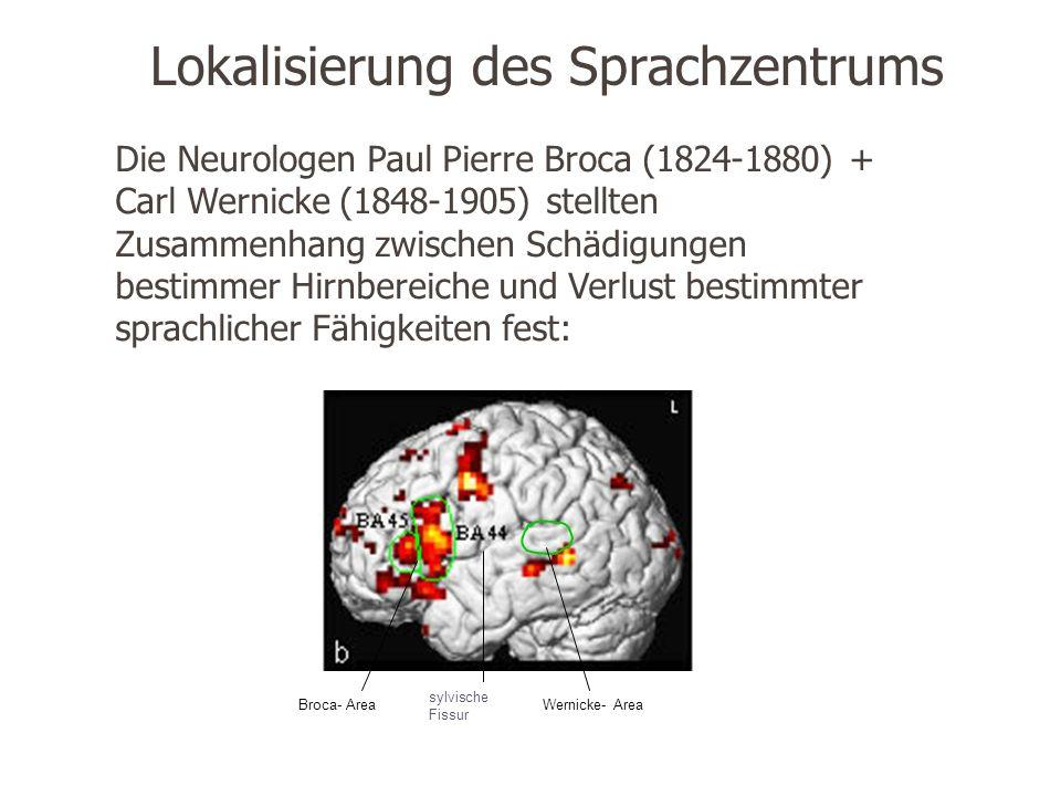 Lokalisierung des Sprachzentrums Die Neurologen Paul Pierre Broca (1824-1880) + Carl Wernicke (1848-1905) stellten Zusammenhang zwischen Schädigungen bestimmer Hirnbereiche und Verlust bestimmter sprachlicher Fähigkeiten fest: Wernicke- AreaBroca- Area sylvische Fissur